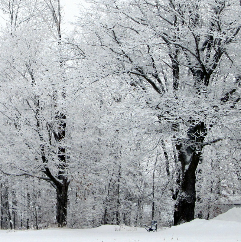 snowy trees and lawn chair
