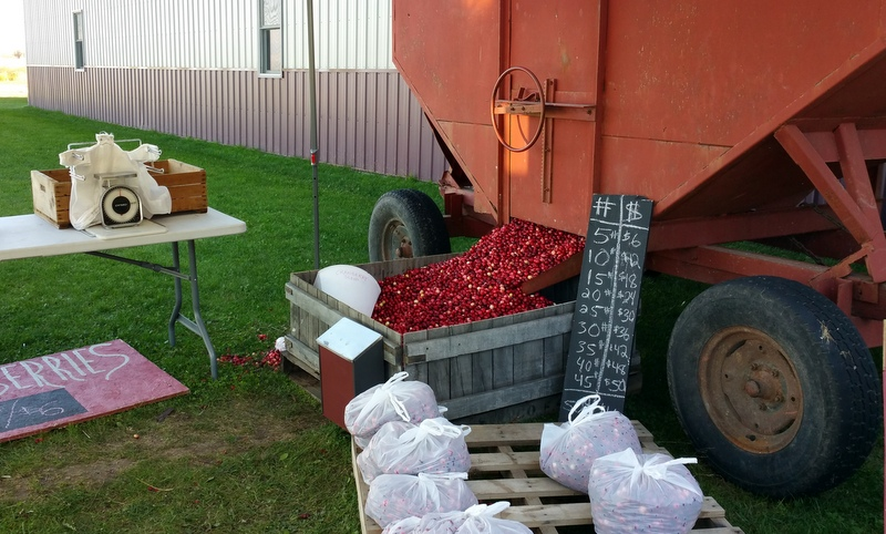 Cranberries at Meadowbrook Family Farms